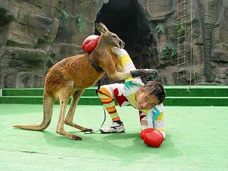 上海野生动物园五一黄金周动物表演场次安排