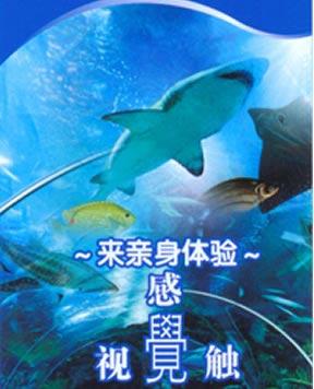 上海海洋水族馆参观券(2008年通票)